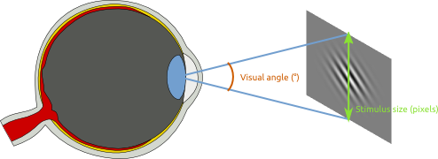 /pages/img/visualangle/fig-eye.png