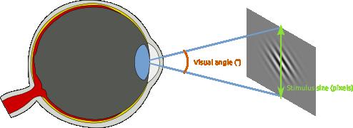 Degrees of visual angle // OpenSesame documentation